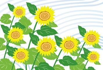 そよ風にそよぐ夏のひまわりの花