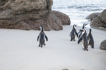 beach of the penguins