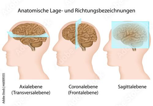 Anatomische Lage- und Richtungsbezeichnungen\