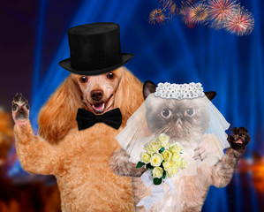 Cat and Dog. Wedding