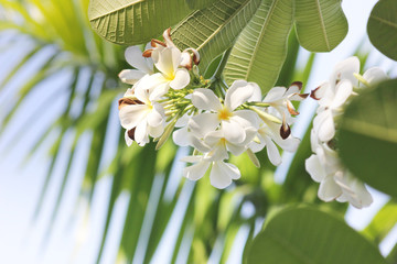 white orchid on blue sky background