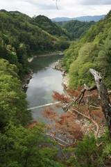 緑深い新緑の天竜峡とつつじ橋