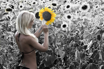 The blond girl painting the sunflower field in the colors