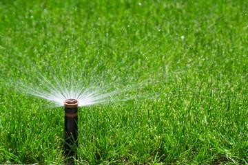 Wall Mural - Sprinkler watering grass