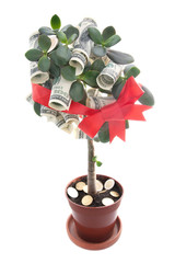 money tree with red ribbon and bow - stock deposit concept