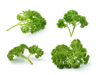 parsley isolated on white background