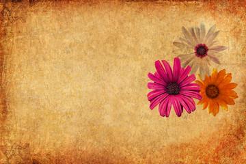 Hamomile flowers