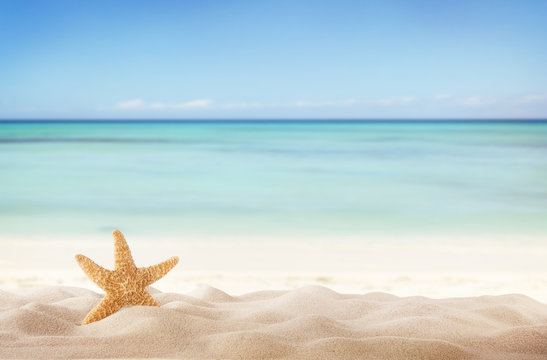 Summer beach with starfish