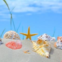 Wall Mural - Muscheln mit Seestern im Sand....