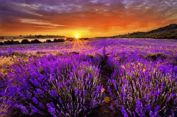 Aluminium Prints Eggplant Lavender