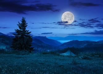 pine tree on hillside under cloudy sky at night