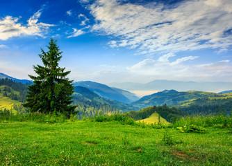pine tree on hillside under cloudy sky
