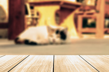 Cat lying in the street near cafe table