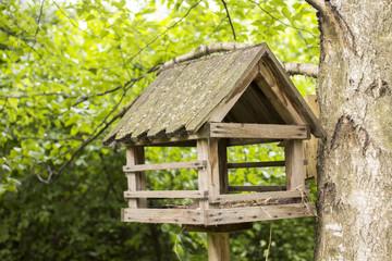 bird nest in the woods