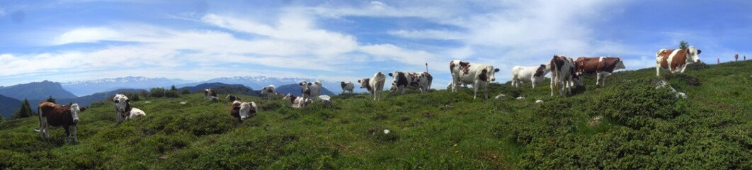 panorama vaches alpes