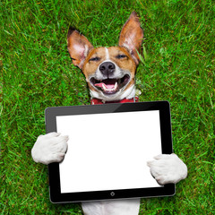 dog holding tablet