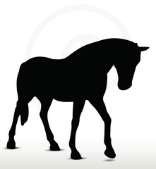 horse silhouette in Walking Head Down position