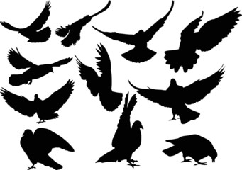 eleven isolated black doves