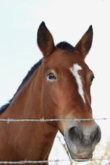 cabeza de caballo asomada