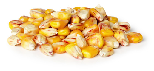 corn seeds on the white background