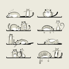 Funny cats on shelves
