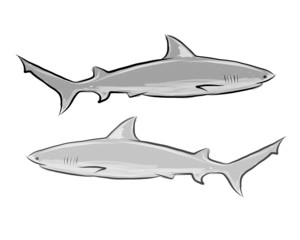 Shark sketch for your design