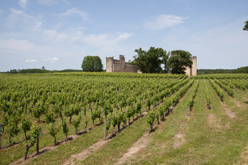 Wall Mural - vigne et fortification
