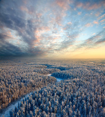 Top view of winter forest