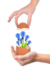 Hand holding light bulbs growing out of the egg