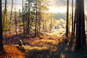 First frost in the autumn forest during hunt