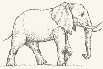 Vector drawing. Elephant