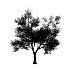 Tree silouette in high resolution