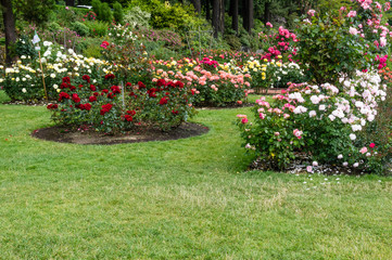 Planted flower beds with roses