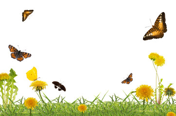 butterflies above yellow dandelions in green grass