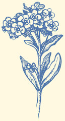 Vector drawing. Sprig of Forget-me-not