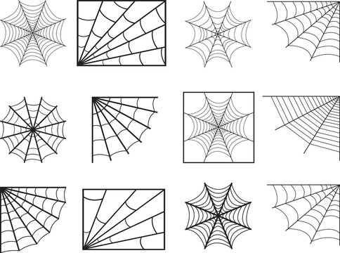 Spider web illustrated on white