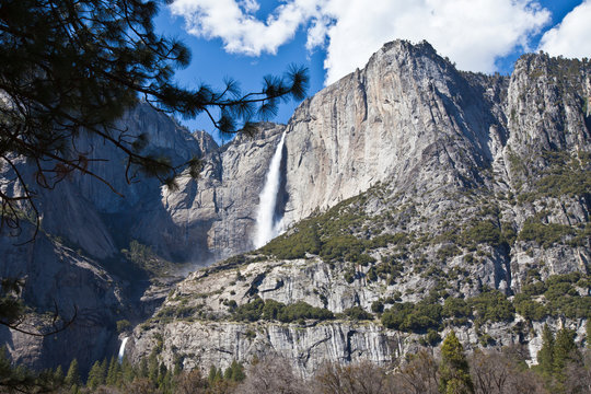 Majestic view of Upper and Lower Yosemite Falls framed with a pine tree