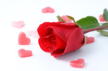 beautiful rose isolated on white background