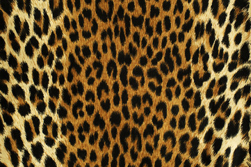 Black spots of a leopard