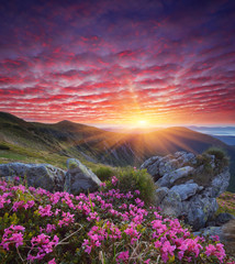 Photo sur Aluminium Aubergine Dawn with flowers in the mountains