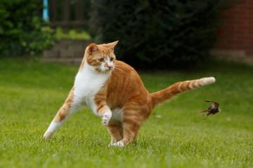 Katze spielt mit Spatz