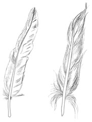 two feathers sketches isolated on white