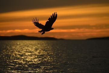 Eagle Silhouette Fototapete