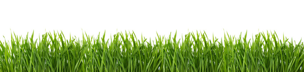 Tuinposter Gras Green grass isolated on white background.