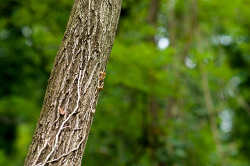 Tree trunk on a blurred background