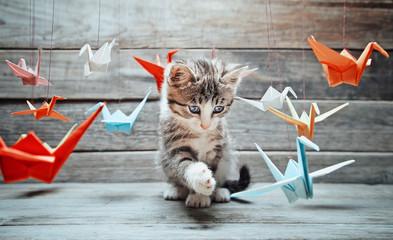 Obraz Kotek bawi się papierowymi żurawiami - fototapety do salonu