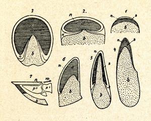 Hoof: 1human nail, 2rhino, 3,7horse, 4llama, 5elk, 6pig
