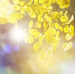 Herbst Sommer Hintergrund