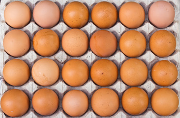 chicken egg in panel eggs