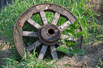 Old wheel of the cart